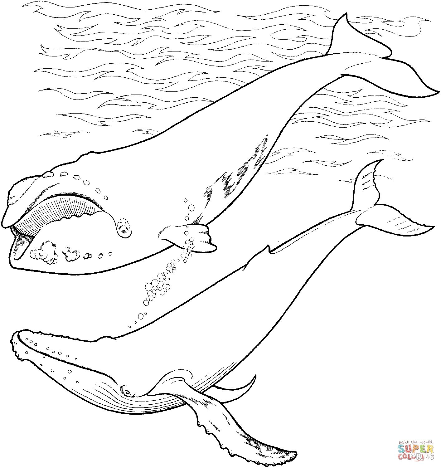 Humpback Whale Coloring Pages To Print Ocean Coloring Pages