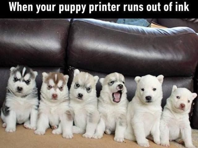 When Your Puppy Printer Runs Out Of Ink Cute Animals