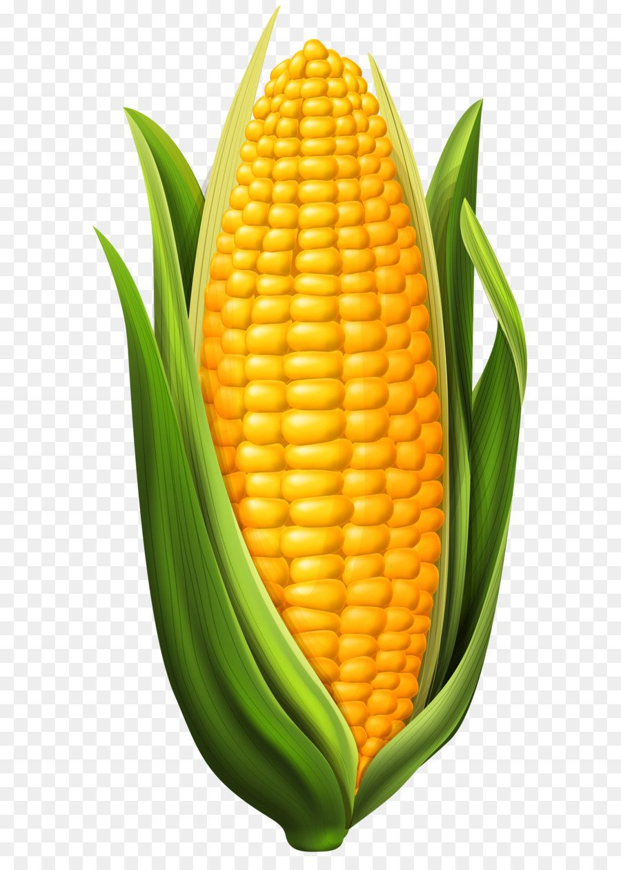 Image Result For Corn On The Cob Vegetable Drawing Vegetable Pictures Corn Drawing