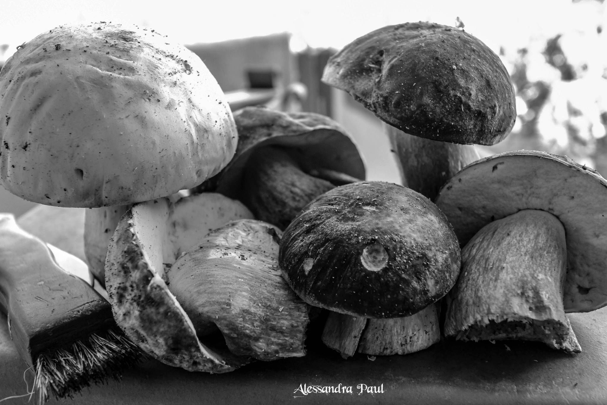 Photography Still Life Food Black And White Shrooms