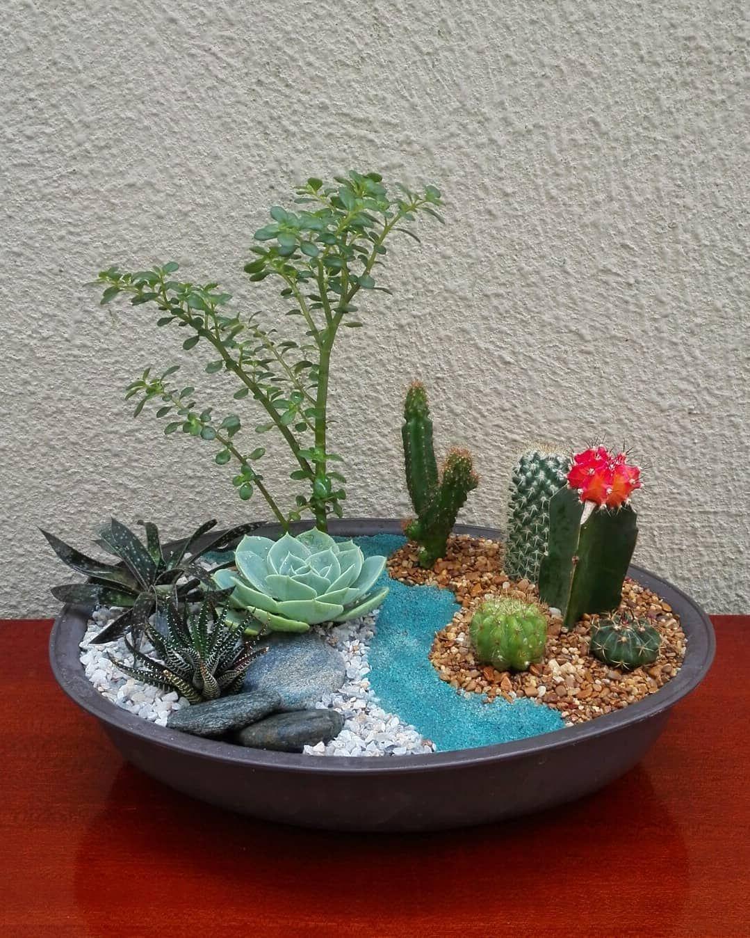 11 Mini jardines de cactus en macetas