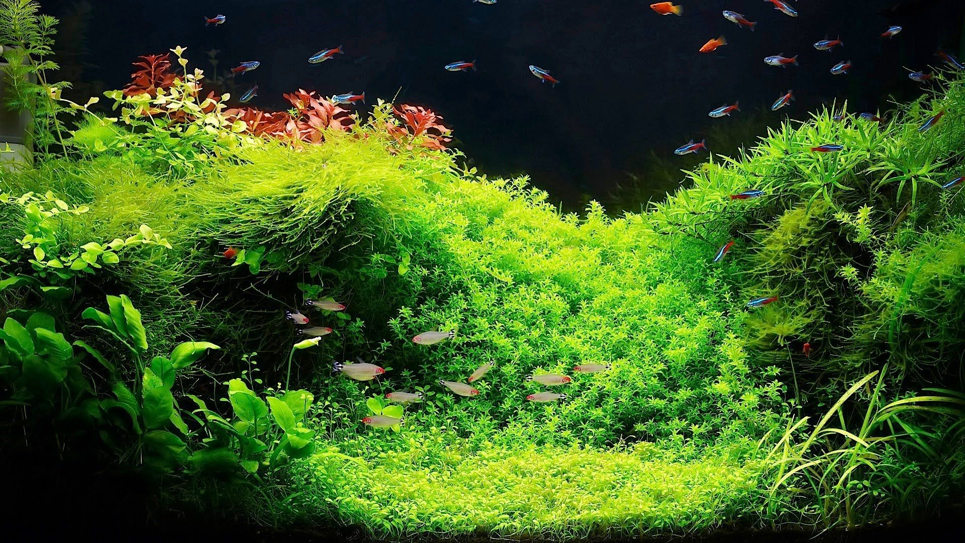 Setting Up A Fish Tank With Live Plants Aquarium Care Planted Aquarium Live Aquarium Plants Freshwater Aquarium