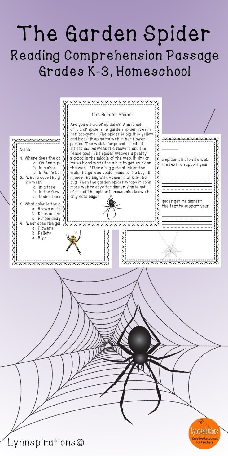 - The Garden Spider- Reading Comprehension Passage For Grades 1-3