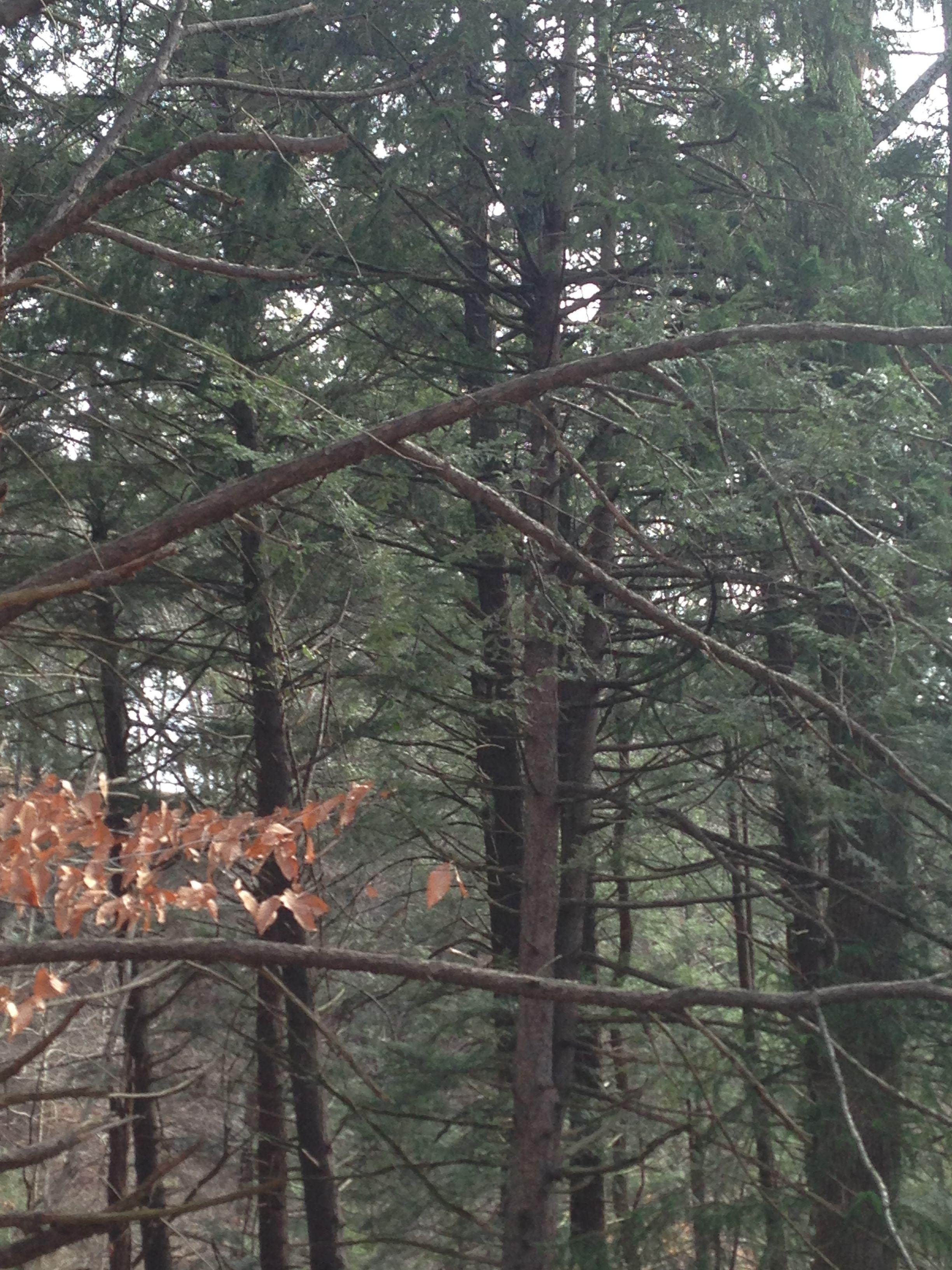 Forest in Huntington, WV Breathtaking & Clean Fresh Air!