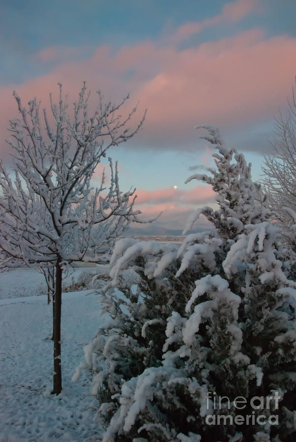 The snow ✯ Boyd Lake Winter Moonset