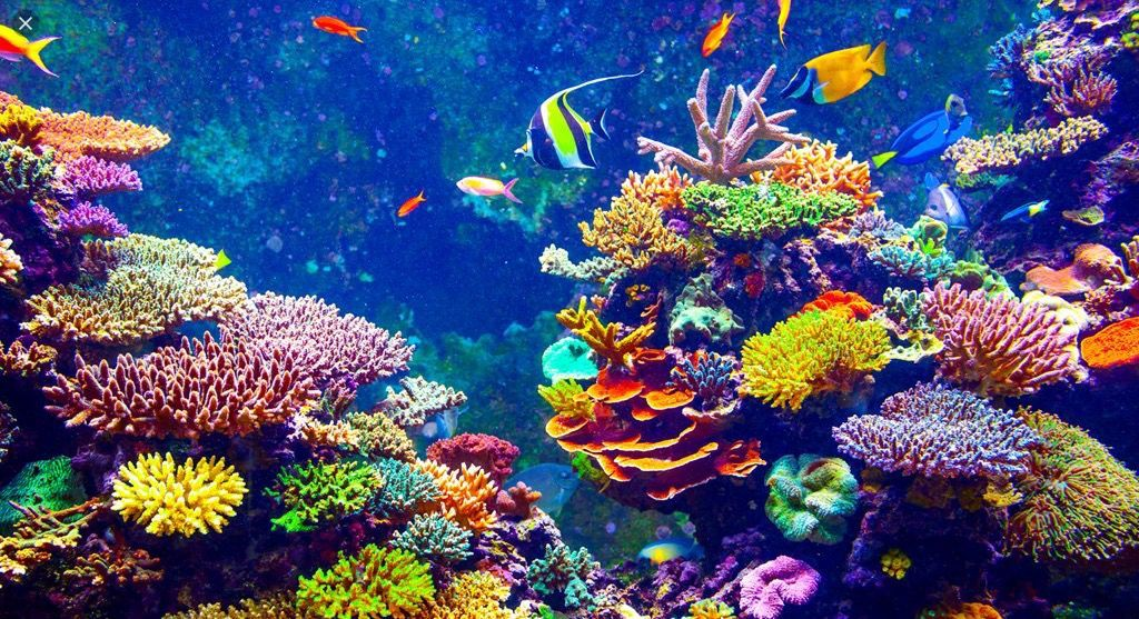 Creatures from the Ocean (Sciles) in 2020 | Coral reef ...