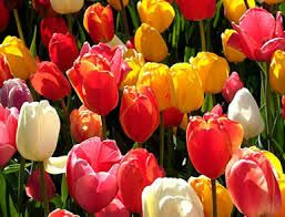 Spring flowers google search spring flowers pinterest spring spring flowers google search mightylinksfo