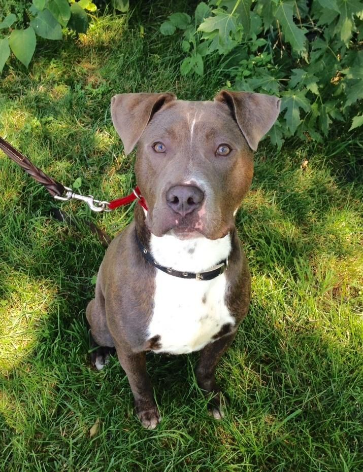 Adopt Hoover15775 on Pets, Pet adoption, Dog adoption