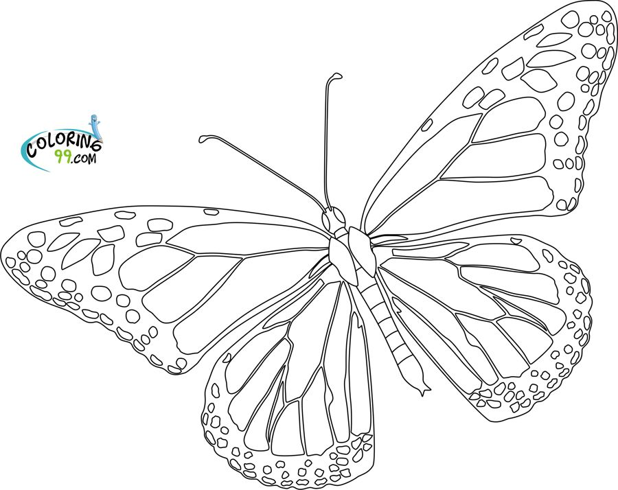 Monarch Butterfly Coloring Pages Printable Butterfly Drawing