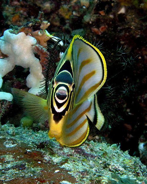 altri pesci mare Dating online