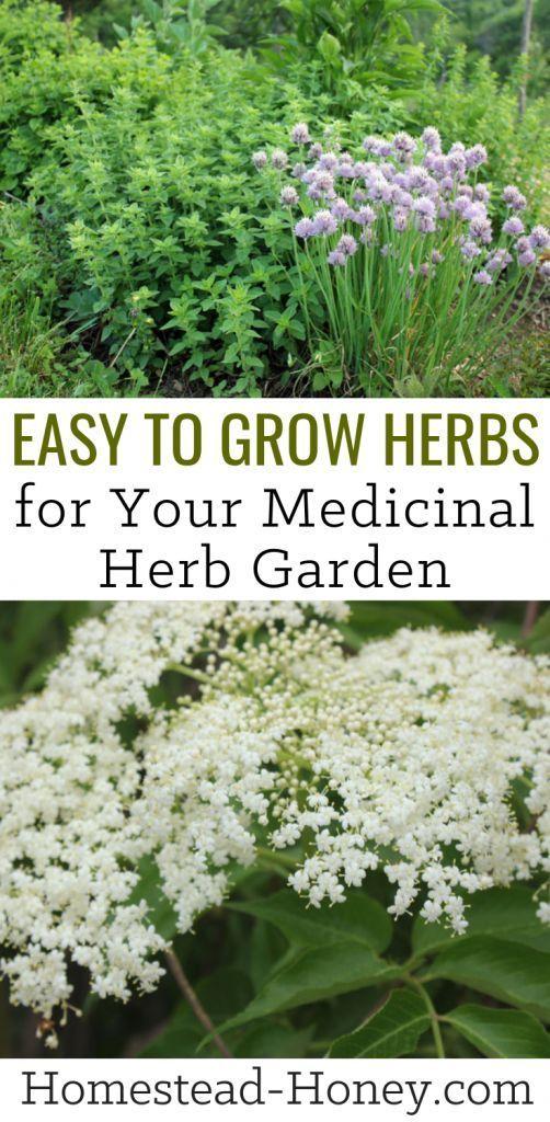 Einfach zu züchtende Kräuter für Ihren Homestead Medicinal Herb Garden #herbsgarden