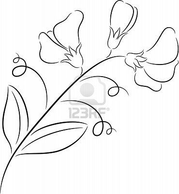 Illustration Of Fresh Sweet Pea Flower, Isolated Royalty Free ...