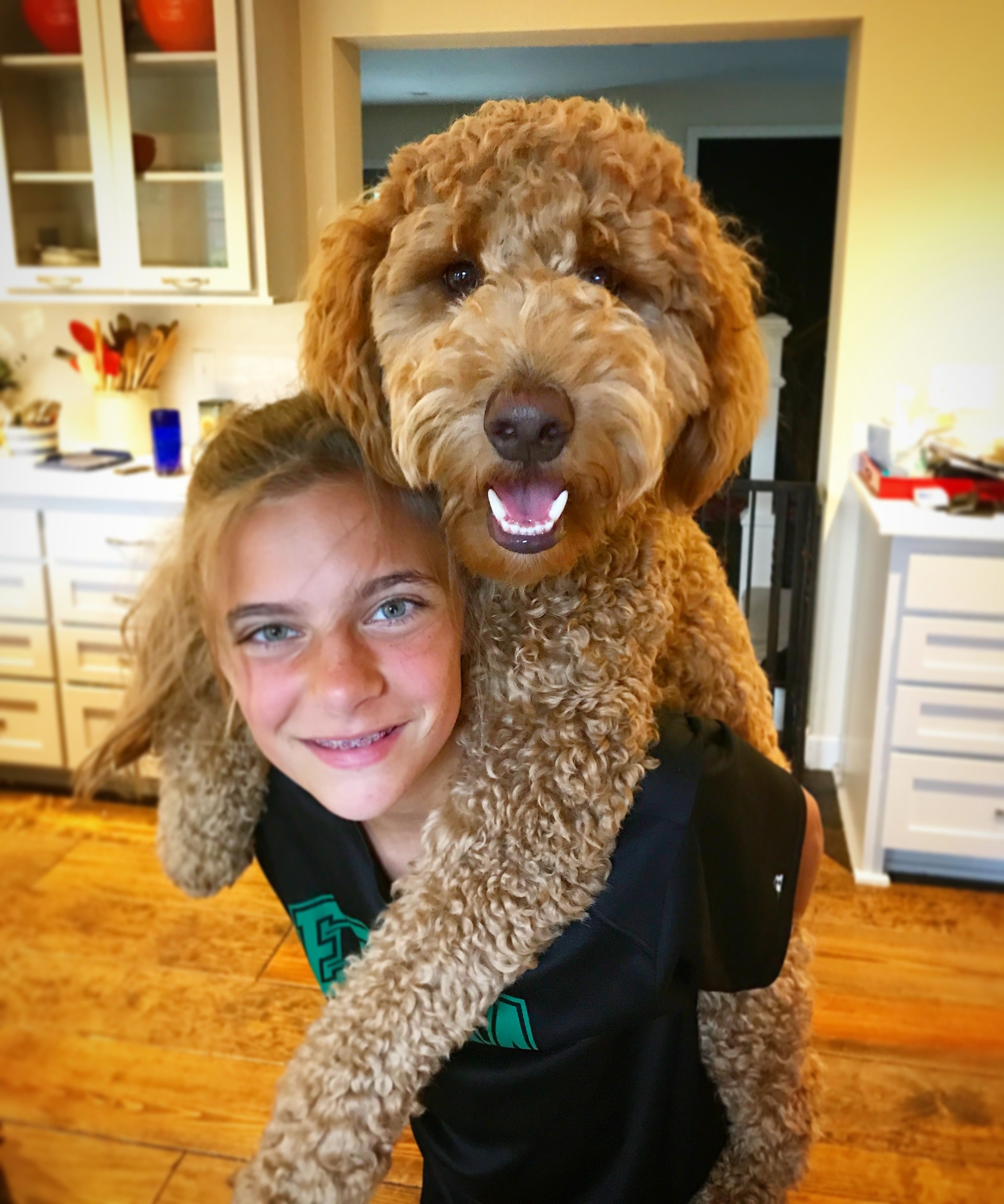 Pin On Goldendoodle Haircuts