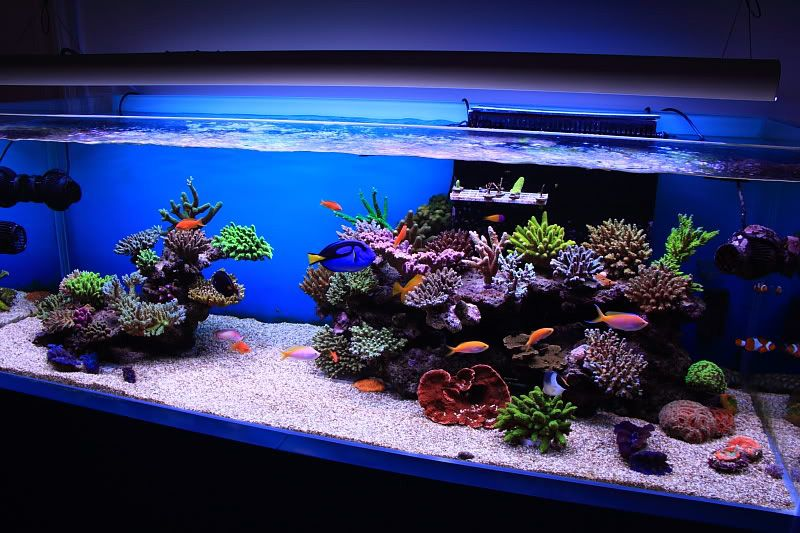 mars aqua 300 watt led modification fish tanks aquarium rh pinterest com marine aquarium ideas saltwater tanks ideas