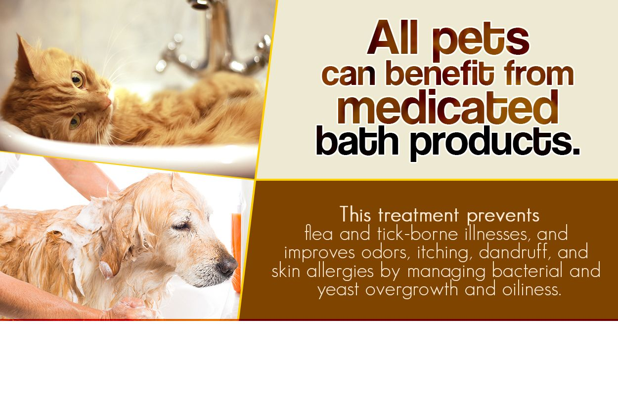Stop By For Mild Medicated Or Oatmeal Shampoos If Your Pet