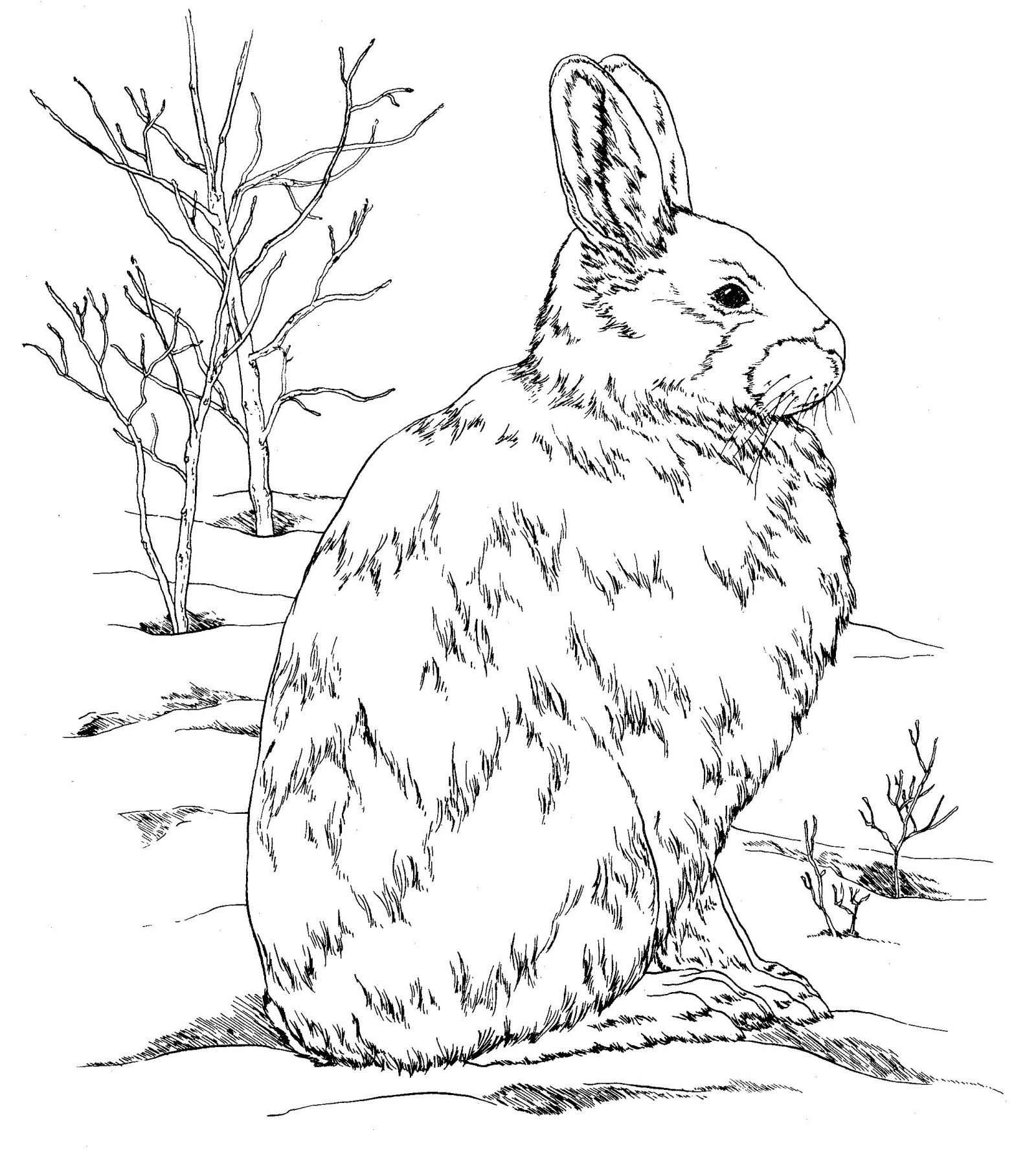 Downloadable Printables For Burgess Animal Book Most If Not All Of