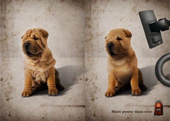 funny dog ad vacuum cleaner