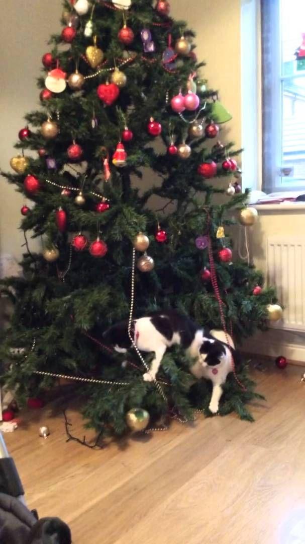 Cats Vs Christmas Trees.Cats Versus Christmas Tree Funny Cats Christmas Tree