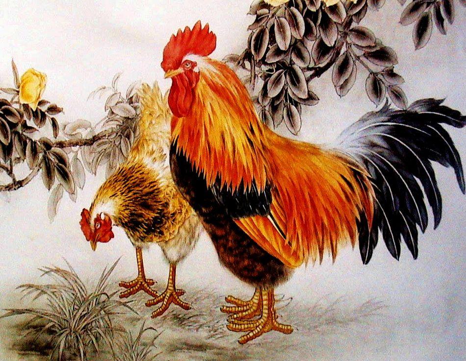 Курицы и петухи картинка