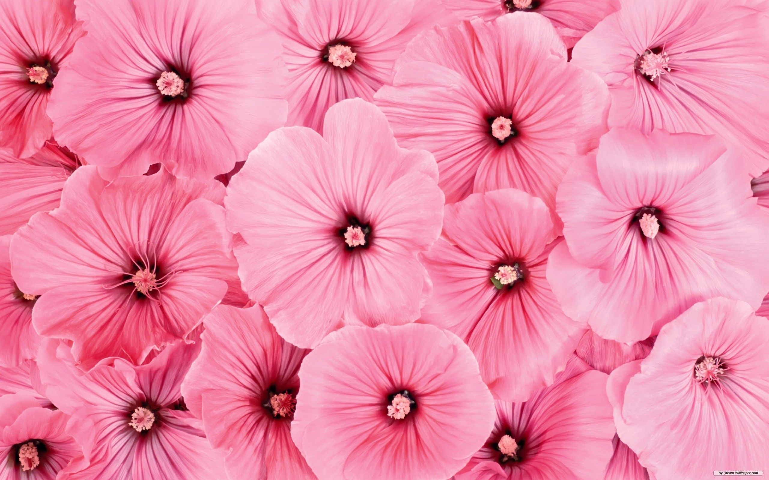 Pink Flowers Check Out More Exciting Hd Wallpapers Covers And Dps For Social Profiles