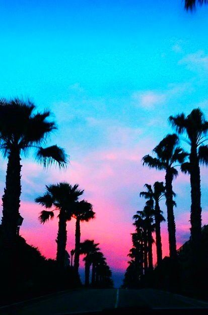 Pin By Angela On Wallpapers Palm Trees Wallpaper Sunset Tumblr Pastel Sky
