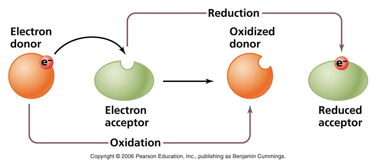 oxidation reduction reaction 2 from above equation we can define : oxidation reaction in which electrons are liberated reduction reaction in which electrons are consumed nb.