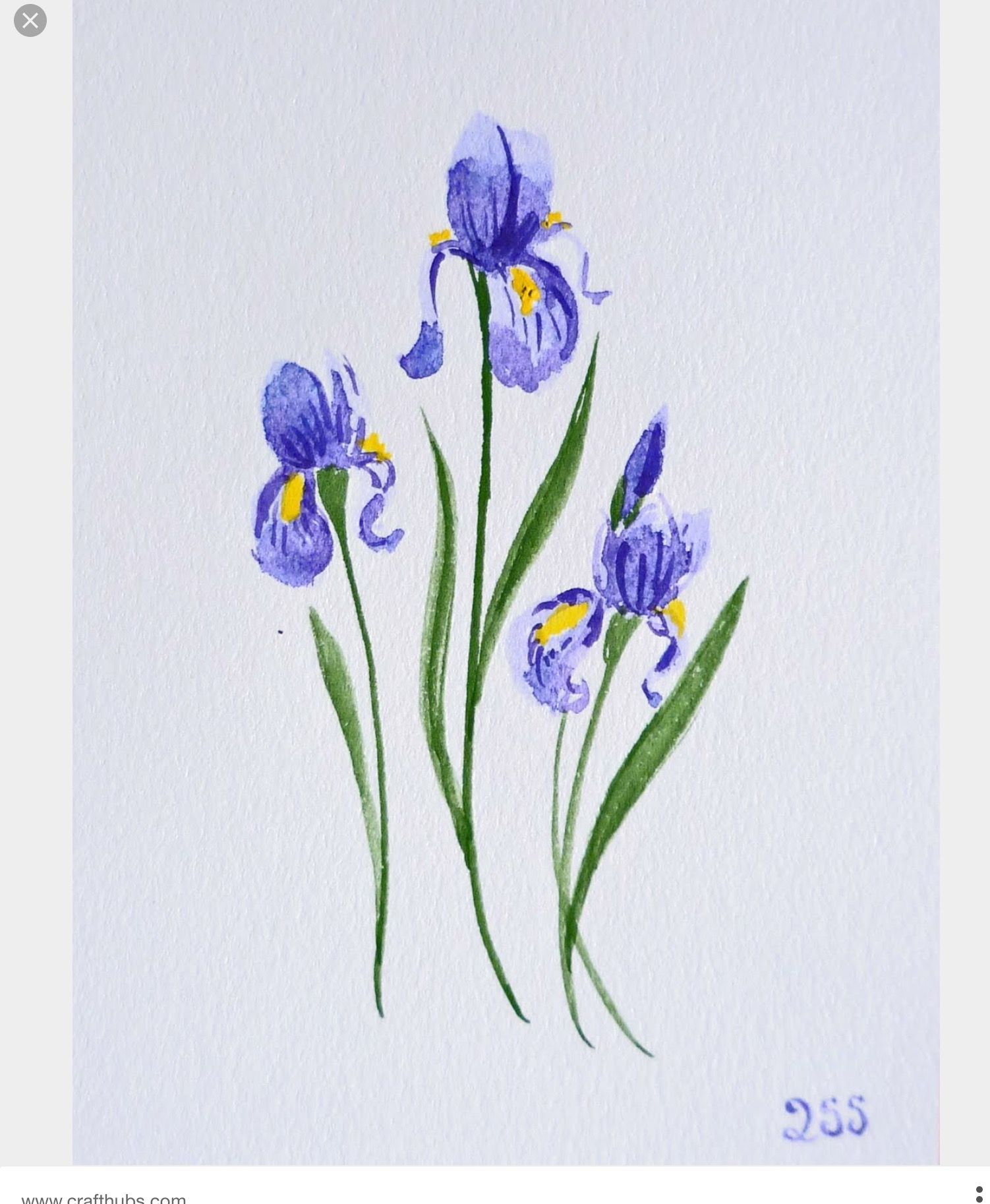 Blue Iris Iris Tattoo Iris Flower Tattoo Iris Drawing