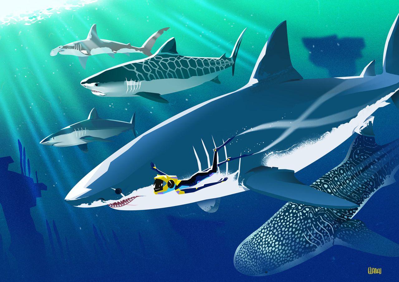 Game Art Shark