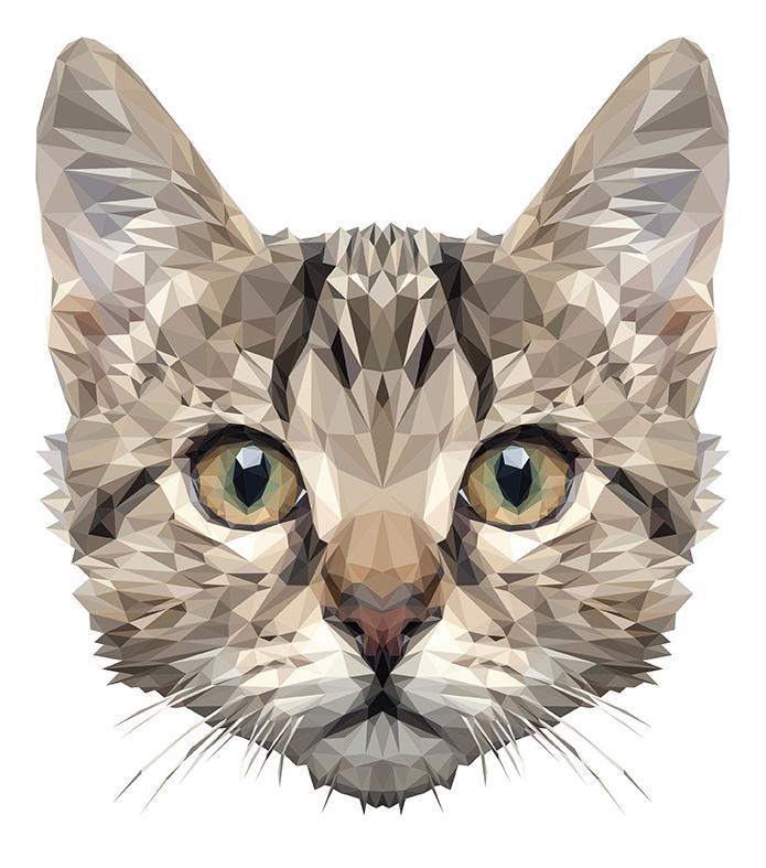 картинки голова кошек характерных особенностях представителей