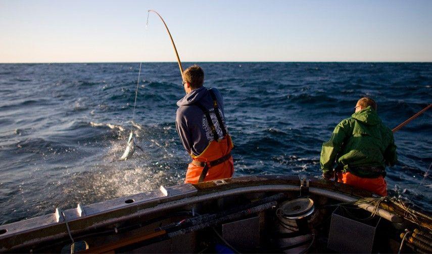 Pole caught tuna whole food recipes whole foods market