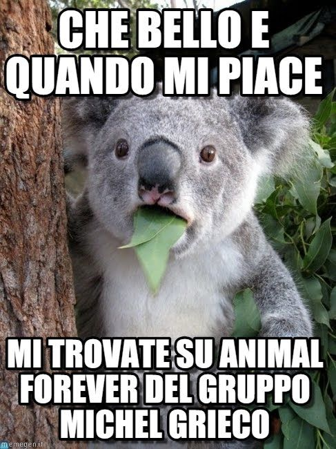 Surprised coala meme (http://www.memegen.it/meme/gdjmmb)