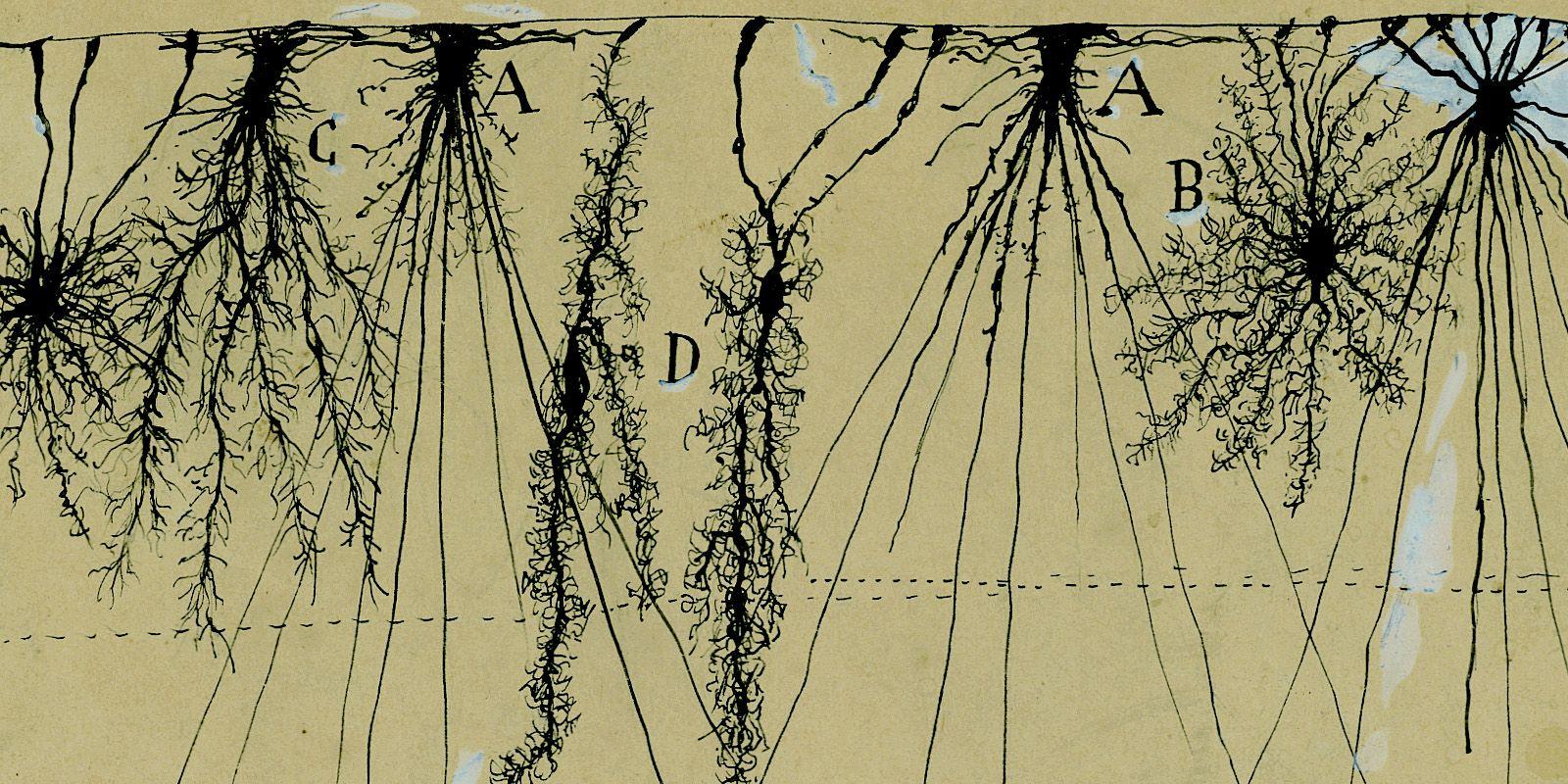 Santiago Ramón y Cajal hizo descubrimientos transformadores de la a ...