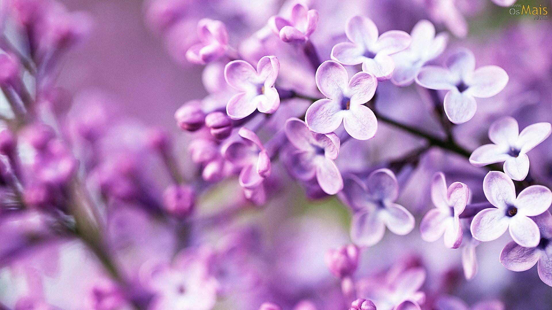 Purple Flowers Wallpaper In 2020 Spring Flowers Wallpaper Purple Flowers Wallpaper Purple Flowers