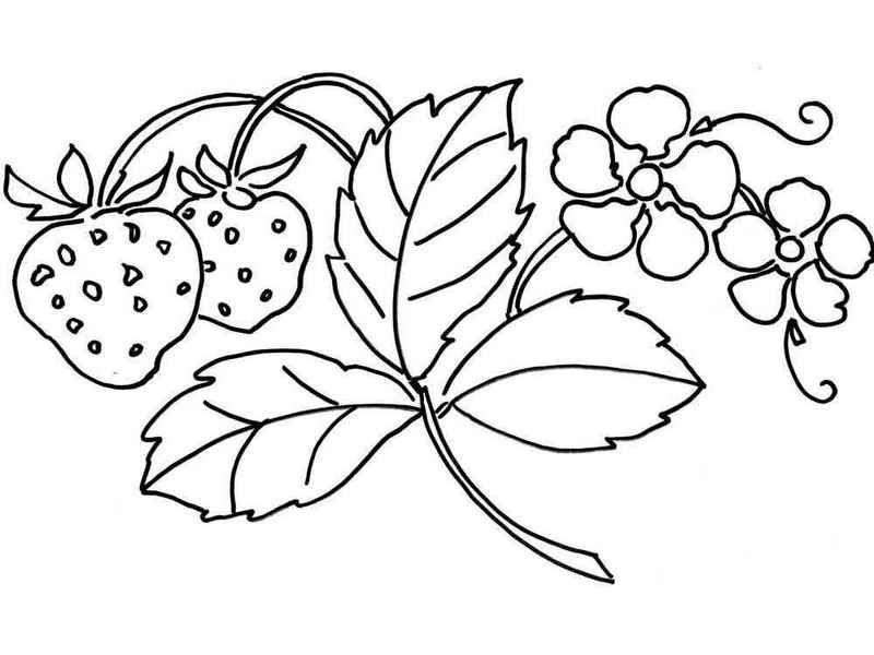 Strawberry And Leaves Coloring Page In 2020 Printable Flower