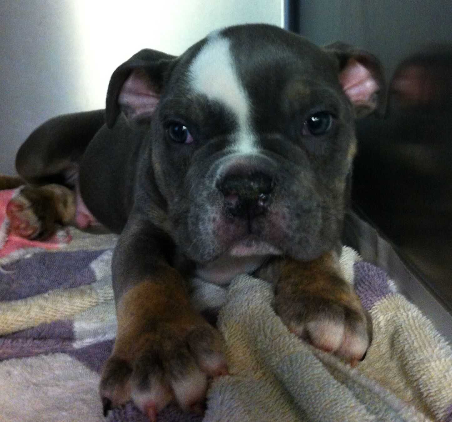 13++ Great falls animal hospital images