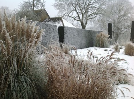Grasses in snow
