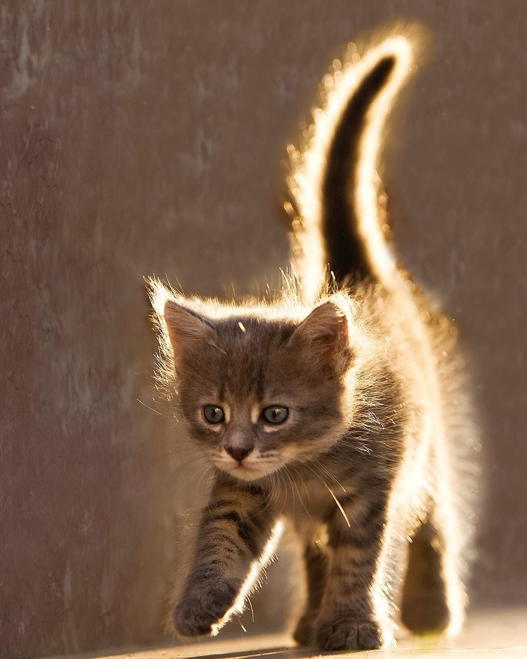 Photo Serhat Demiroglu Photography Congrats Tebrikler Selected By 17tanju Creativityfound Pursuepr Kittens Cutest Cats Cute Cats