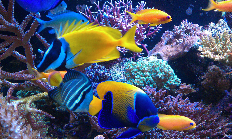 Pin On Saltwater Fish