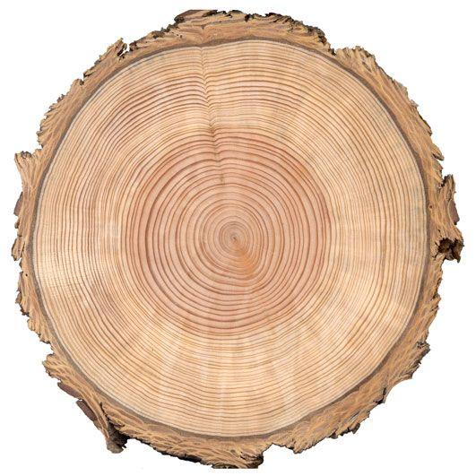 40+ Cutting Down Logs Clipart
