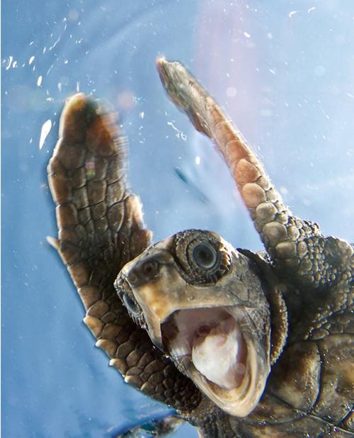 Happy turtle!