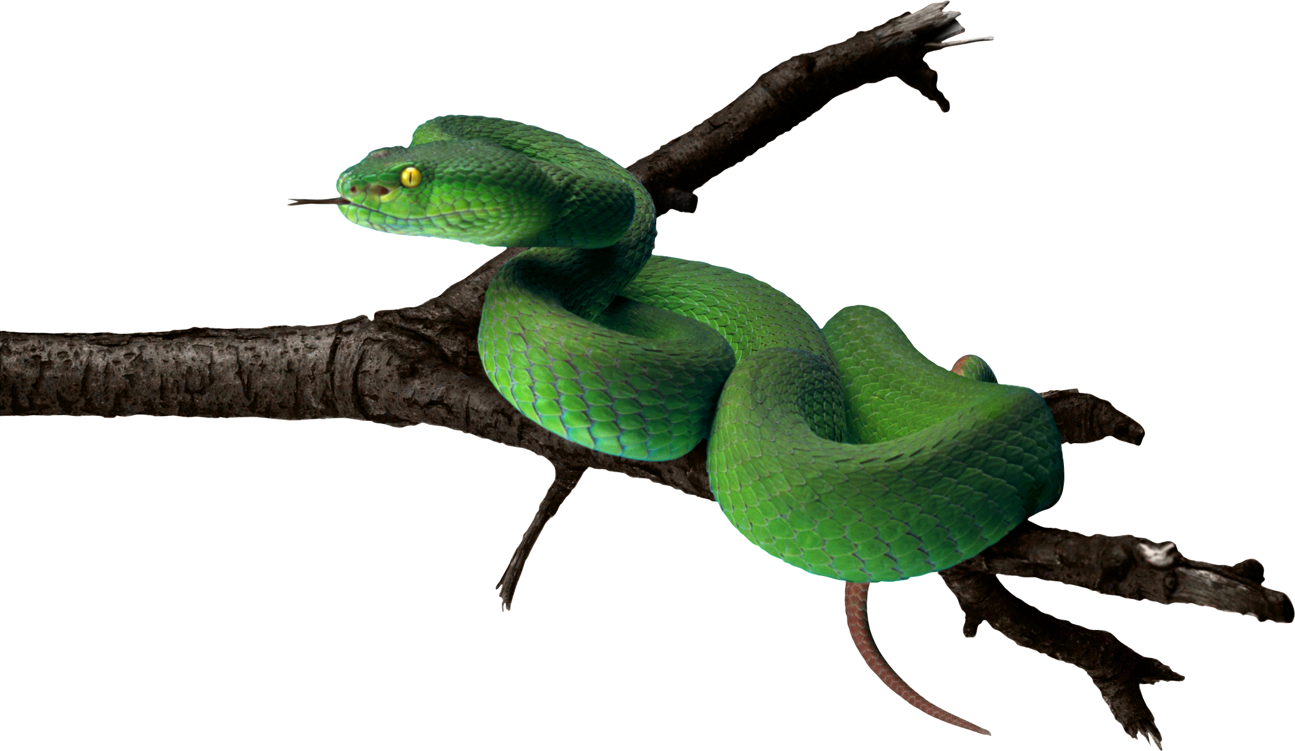 Download Png Image Green Snake Png Image