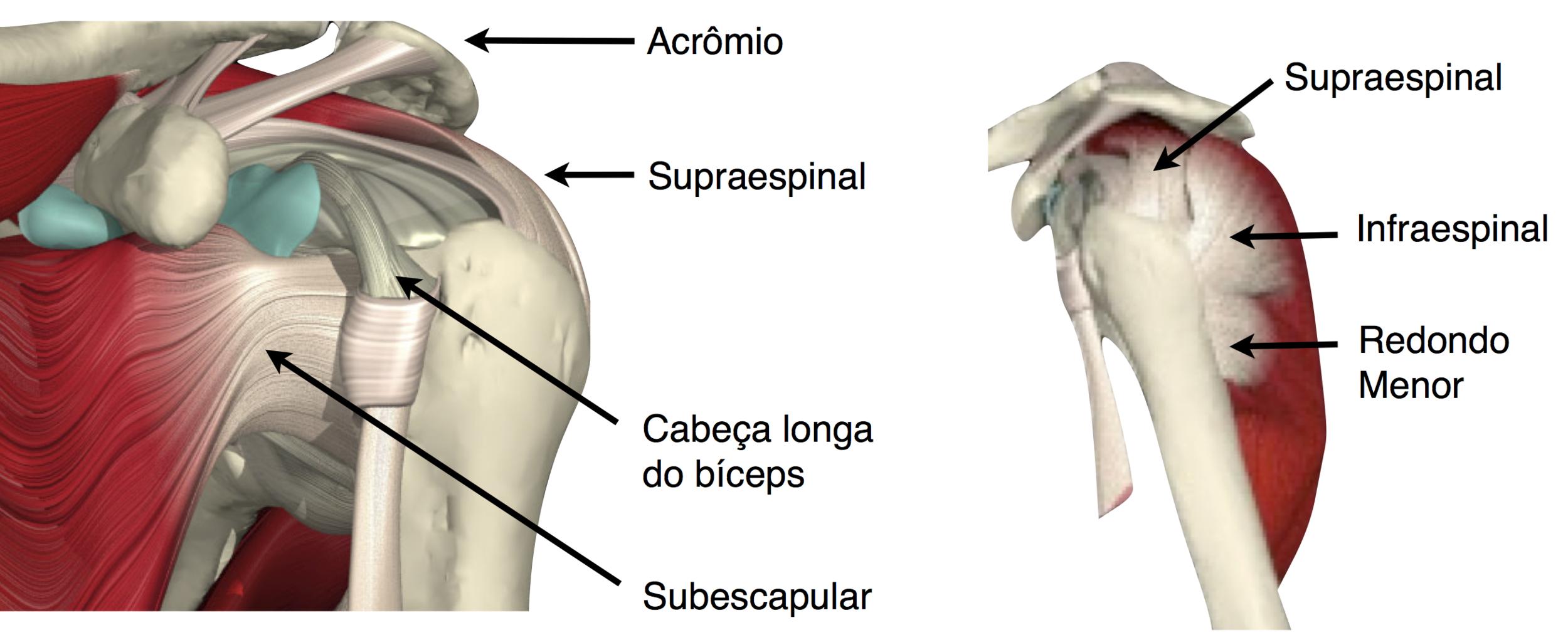 Asombroso Glúteo Bursa Anatomía Regalo - Anatomía de Las Imágenesdel ...