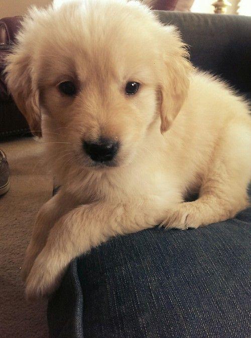 cute little guy