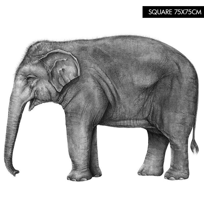 Hugo The Elephant Beautiful Elephant Illustration