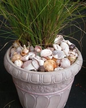 Use shells to top off a pot. Why have I never thought of this as a way to use my collected shells? by madge