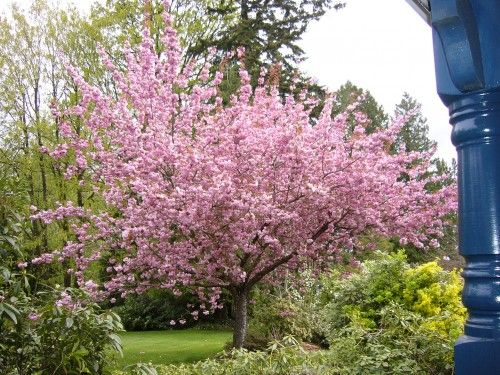 Traditional Landscape Trees To Plant Flowering Trees