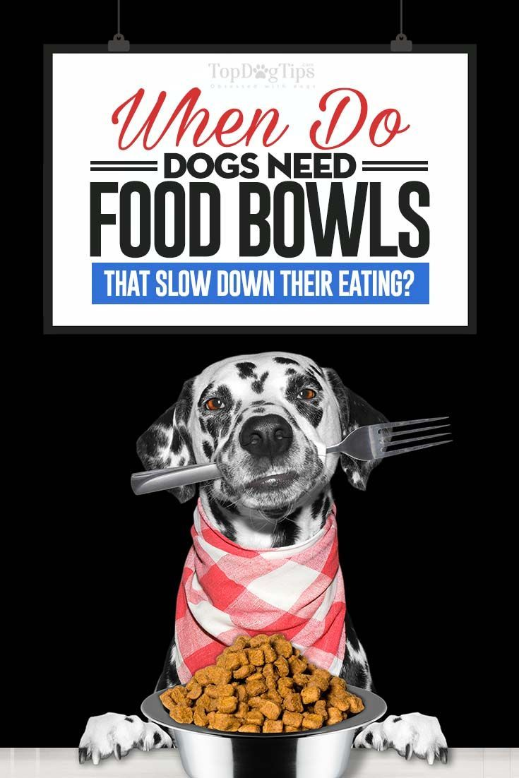 Dog food bowls that slow down eating when do you need one