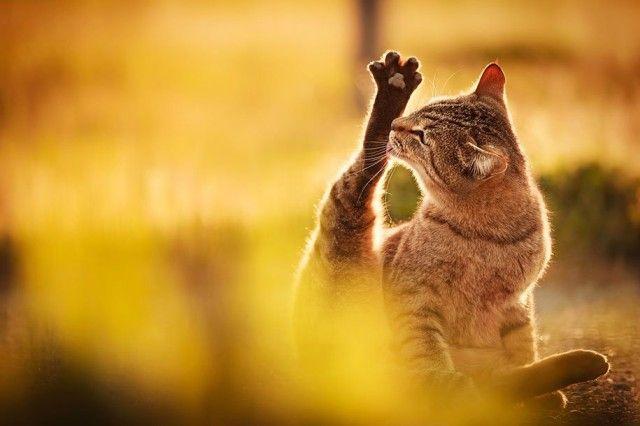 Awesome Cat Photography by Seiji Mamiya