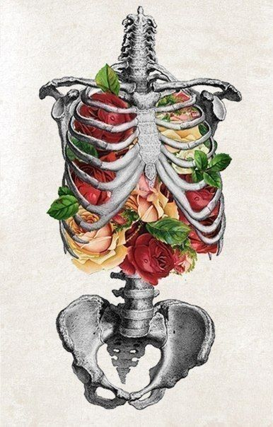 Rib Cage Drawing With Flowers : drawing, flowers, Studio, Motive, Anatomy, Prints,, Inspiration
