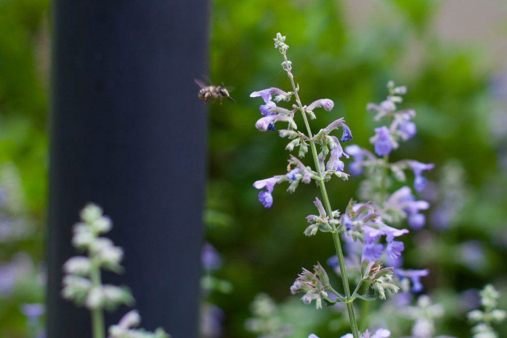 General Tips for Planting a Pollinator Garden Pollinator